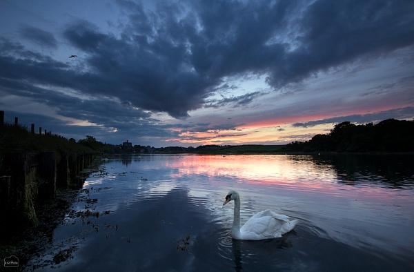 Sunset Swan by ICH_Photos