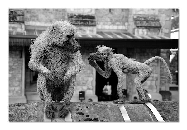 Monkey Business by heffalump