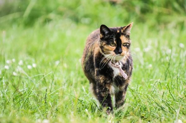 Cora Cat by Kilmas
