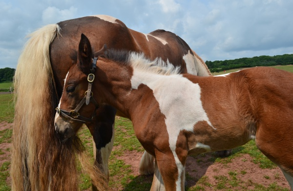 Mare & Foal by hammers3417