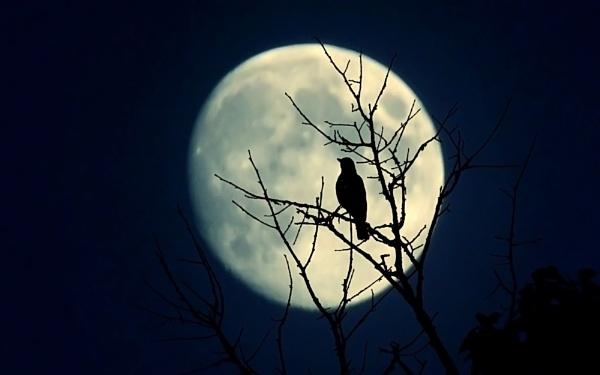 Night singer by ValeryAst