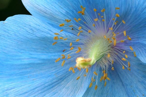 Breathtaking Blue by Tigger1