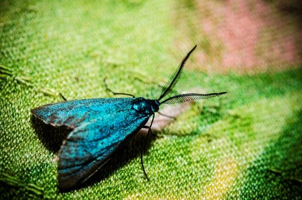 Blue Wings by AEA