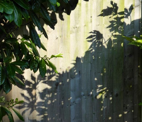 Saturday Shadows by Anne66