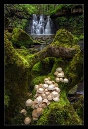 Shroom Falls