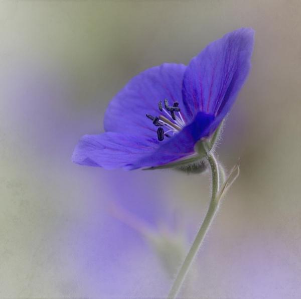 In the garden by JenniCh