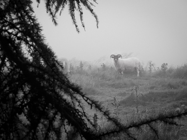 Misty hillside by Dlees78