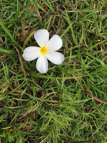Fallen flowere by mute