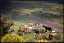 04559 - Sicilian Landscapes by Gernot