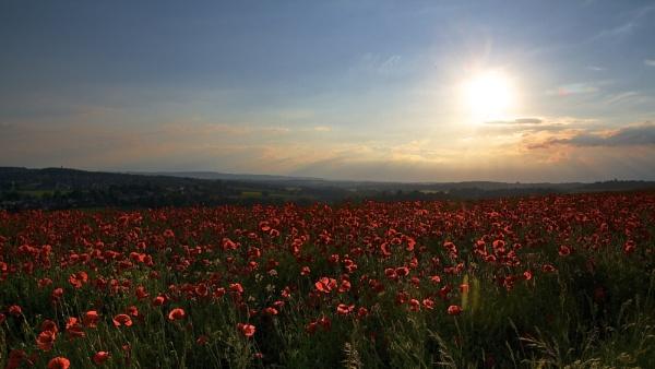 Sun set over English Field Poppies 11 by altosaxman