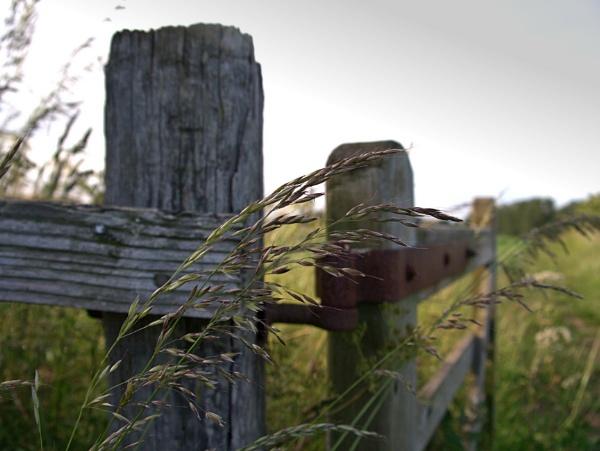 Grasses by Dors-pics