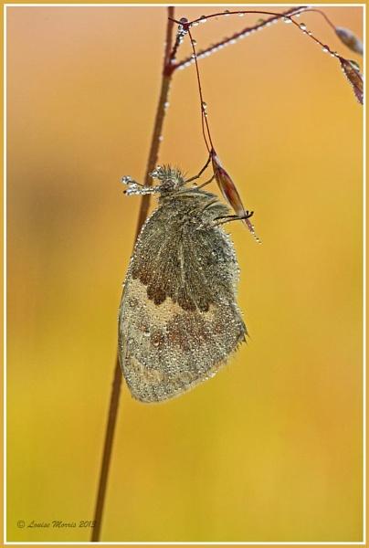 Small Heath II by Louise_Morris