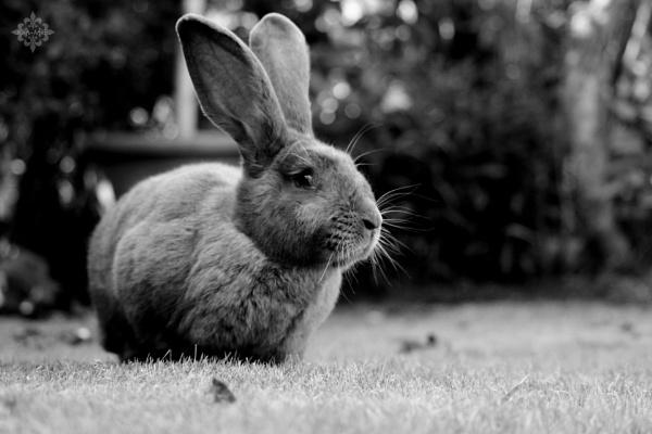 I\'m a really bunny! by KAME