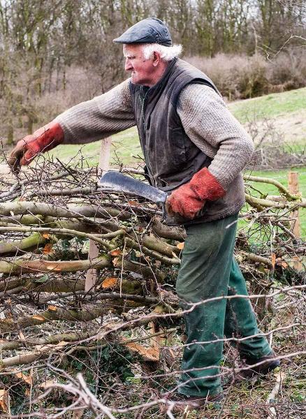 Shropshire hedgelayer by mugshotmyk