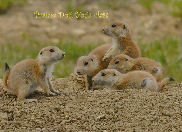 Prairie Dog humor by StuartDavie