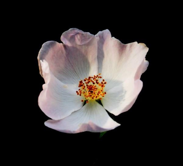 Flower Power by straightbat