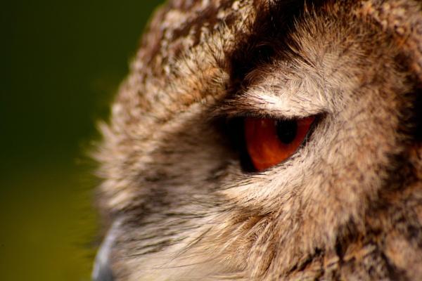 Eagle Owl..... by Mrsbass