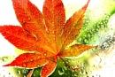 Water Droplet Leaf