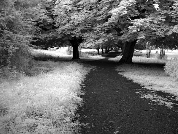 Boxmoor path by bmh1
