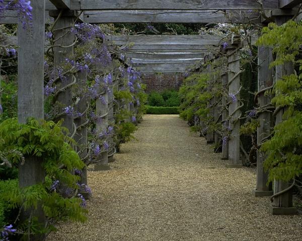 Wisteria Walk, Norfolk by davevee