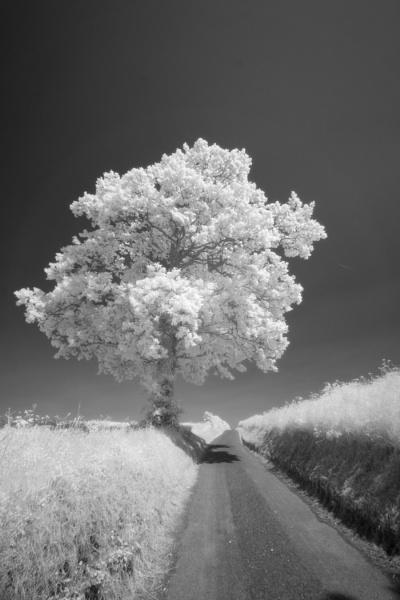 Tree down the lane by john thompson