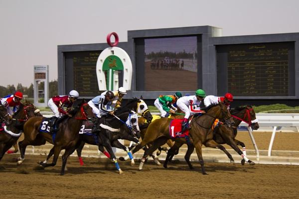 Saudi Arabian Race Horses by WorldInFocus