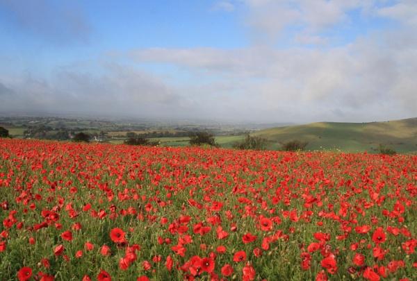 Poppy Field by Brian65