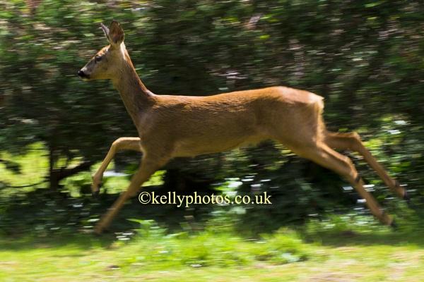Oh Deer by glendalough