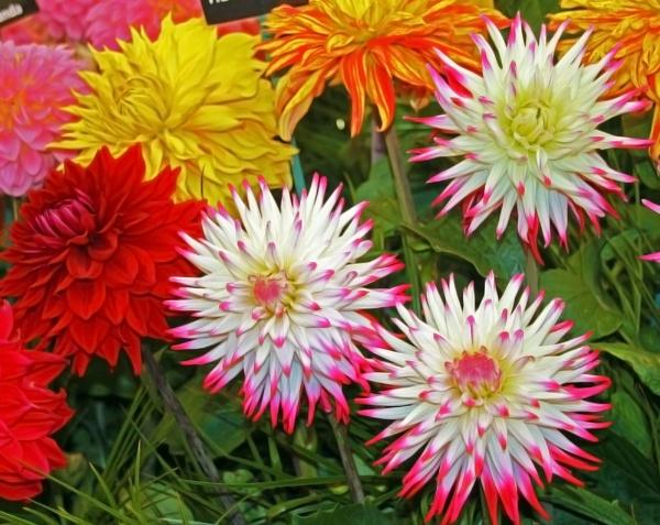 Beautiful flowers at Hampton Court Flower Show
