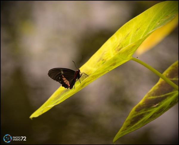 Papillon (Butterfly) by hunter031072