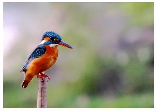 waiting for fish.... by Buddhadev