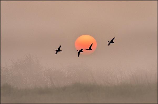 A Winters Dawn by adriansart