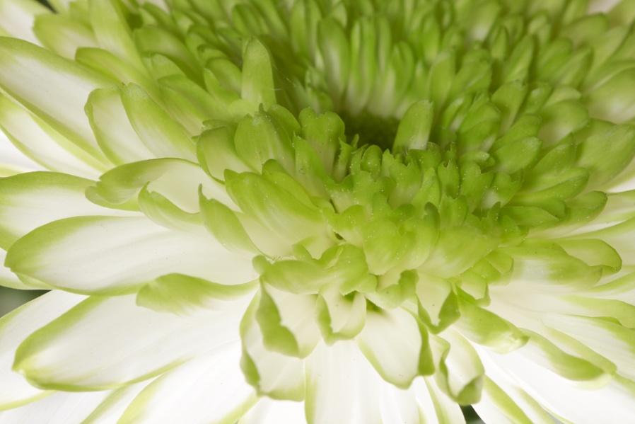 Backlit Bloom