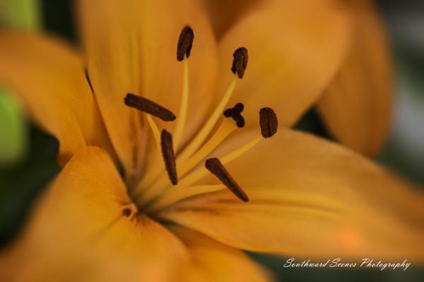 Orange Burst by shutterbug8156