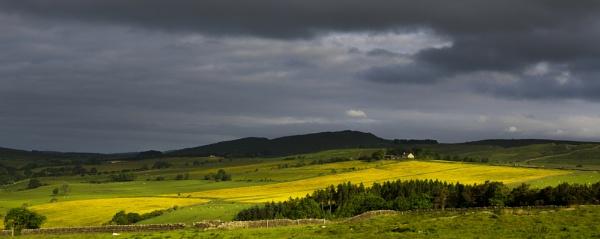 Buttercup Fields by Nigeve1