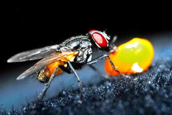 fly by aslamshaikh104