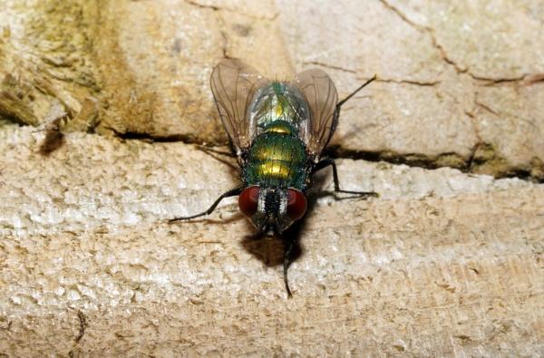 Fly Guy by Dalejackson
