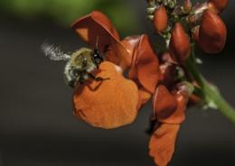 Bee take off