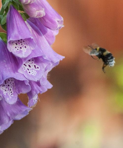 Busy as a bee by StephenDM