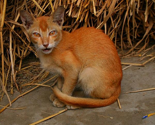 Cat by montu