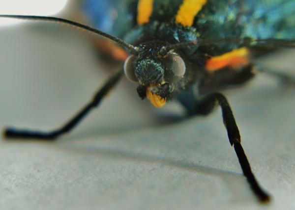 butterfly by stu8