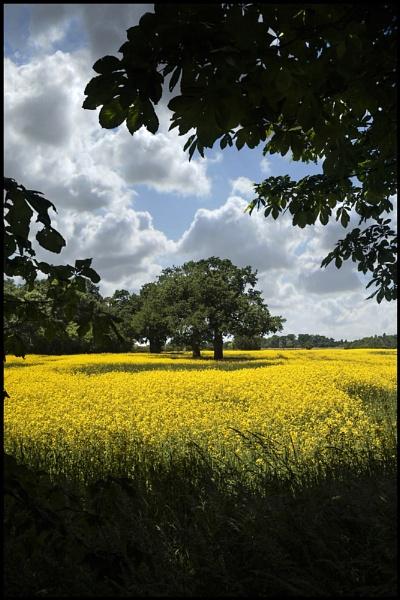 Little bit of England. by Niknut