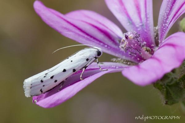 No I'm not a blooming Dalmatian...