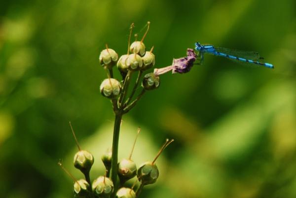 A blue lady.... by Chinga
