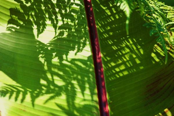 Summer shadows by Chinga
