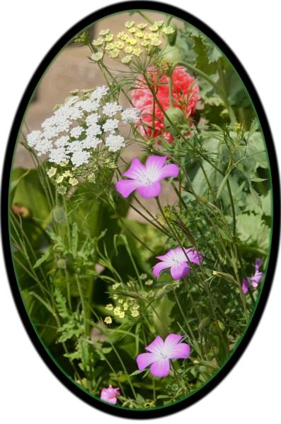 \'garden flowers\' by Margaret101
