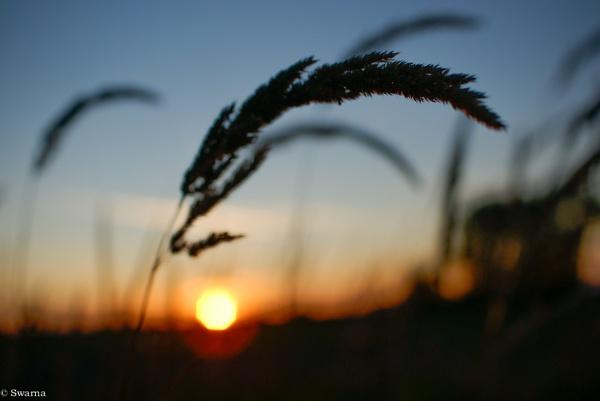 Sunset by Swarnadip