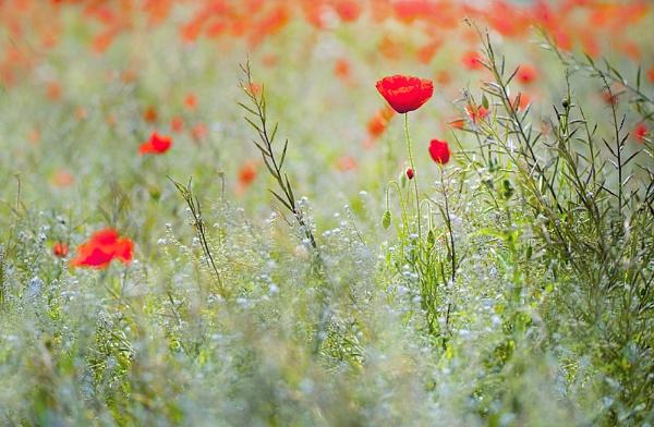 Summer Meadow by jackyp