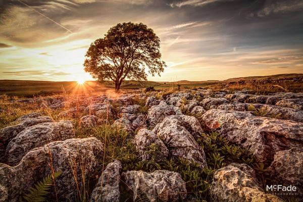 Sunny Tree by ade_mcfade