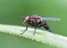 full macro fly